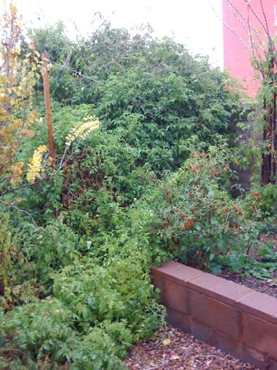 Enormous terrifying tomato jungle